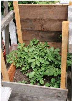 How to build a DIY potato box.