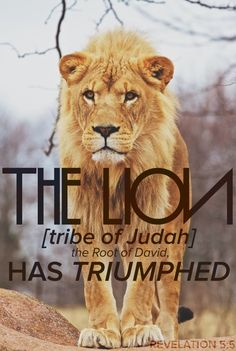 The Lion of The Tribe of Judah Forever Reigns! Tribe Of Judah, Jesus Is Coming, Lion Of Judah, Spiritual Warfare, King Of Kings, Jesus Christ, Savior, God Is Good, Dios