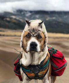 Cachorro e gato nas montanhas 2