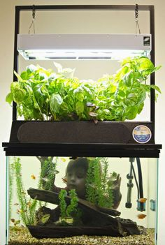 ECO-Cycle kit grows greens and cleans aquarium water