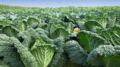 Can Leafy Greens Prevent Glaucoma?