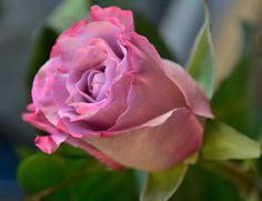 Flower,II by Ev By on 500px