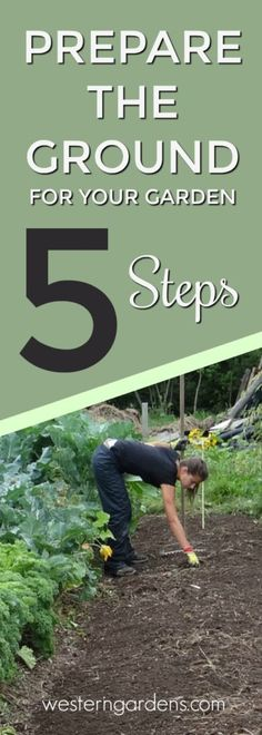 5 steps to prepare the ground and soil for your garden