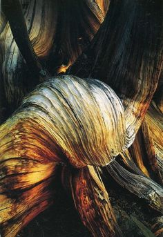 de structuur is het schors van de boom, de textuur is ruw en met lijnvormige groeven.