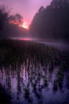 Down on a misty morning along Courtois Creek, Missouri, by Robert Charity.