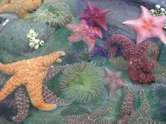 starfish, ocean, and sea image No Ordinary Girl, Underwater World, Summer Aesthetic, Ocean Life, Marine Life, Sea Creatures, Lovely Creatures, Under The Sea, The Little Mermaid