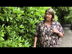 ▶ How to Prune Rhododendrons - Instructional Video w/ Plant Amnesty - YouTube