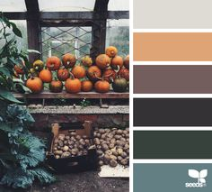 Harvested Hues - https://www.design-seeds.com/autumn/harvested-hues