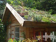 comment réaliser une toiture végétalisée sur une petite surface (le toit d'un abri de jardin par exemple).