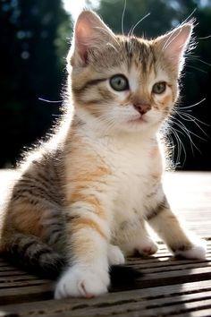 SPRING AWAKENING. #cats, #cat lover, #kitten