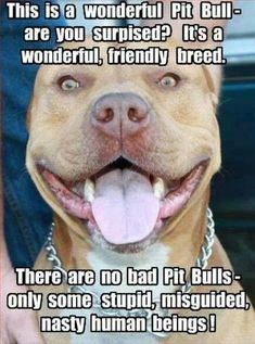 Don't Judge My Pit Bull ! This is the TRUTH! Educate yourself and don't spread ignorance!