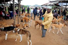 Quick links to share the petition: Do not allow dog meat sellers to set up permanent market in Jos, Nigeria! | Yousign.org