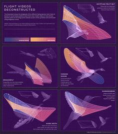 Beautifully-Animated Infographics Designed by Eleanor Lutz - My Modern Met