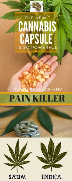 New Cannabis Capsule Is So Powerful That It Can Replace Big Pharmaceutical Painkillers – Healthy Food And Sport Tips