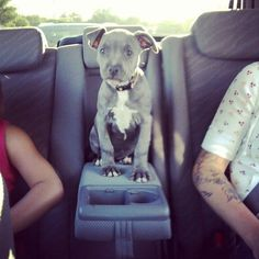This Is How They Sit In The Middle   14 Things Dogs Do Better ThanAnyone