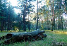 Встреча рассвета в лесу