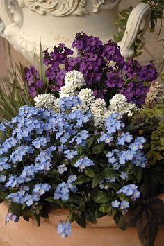 ❥ fleurs de la jardin