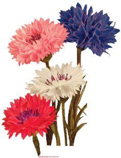 orquideas, rosas, lili flora, margaritas, claveles, adornos