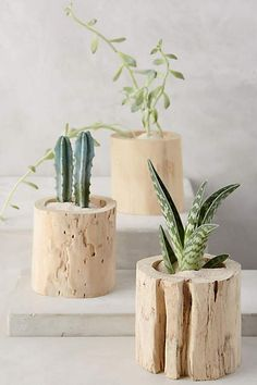 Tree Trunk Planter - anthropologie.com