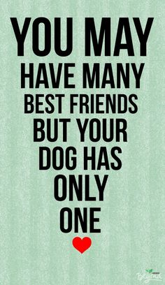 Dogs are friends for life. We have 2 dogs & 2 cats ~ the good life with loving and entertaining babies that get along well & play when they believe no one is looking!
