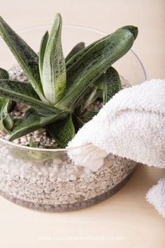 Use a rag to absorb excess water if you pour too much on your succulents
