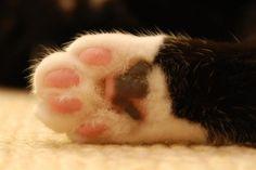#Cats  #Cat  #Kittens  #Kitten  #Kitty  #Pets  #Pet  #Meow  #Moe  #CuteCats  #CuteCat #CuteKittens #CuteKitten #MeowMoe      #CuteCats...   https://www.meowmoe.com/30291/
