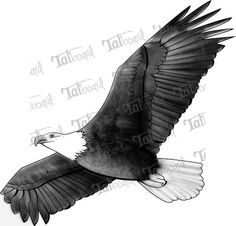 eagle tattoos | Eagle Flight Flying Bird Tattoo Design Black And Gray