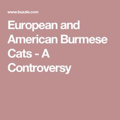 European and American Burmese Cats - A Controversy