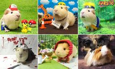 A Japanese man has found fame for his pet after creating elaborate costumes for his guinea pig and posting the results to social media.