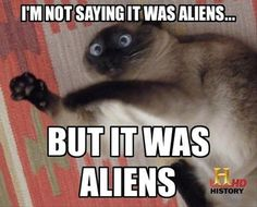 history channel aliens funny cat - Dump A Day Crazy Cat Lady, Crazy Cats, Funny Cute, Funny Shit, Funny Stuff, Cat Stuff, Awesome Stuff, Cat Expressions, Aliens History