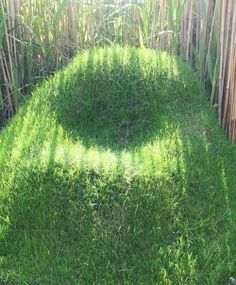 grass covered mound in shape of chair  (living furniture)