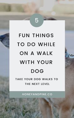 Discover 5 fun things you can do while on a walk with your dog that make the experience a lot more fun for the both of you. Love Your Pet Day, The Perfect Dog, Kinds Of Dogs, Dog Wear, Love To Meet, Dog Hacks, How To Train Your, Getting Bored, Dog Training Tips