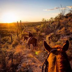 photo by @susanseubert // riding off into the sunset on a beautiful evening at Tanque Verde Ranch through the mountains skirting Saguaro National Park @natgeocreative #nationalpark #desertlife Hotels-live.com via https://instagram.com/p/9GmqELIMaV/