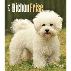 Bichon Frise 2014 Hardcover Engagement Calendar   2014 Bichon Frise Calendars   DogBreedStore.com