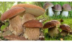 Virtuálna knižnica Stuffed Mushrooms, Vegetables, Food, Stuff Mushrooms, Essen, Vegetable Recipes, Meals, Yemek, Veggies