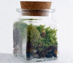 There is a book about these, Tiny Terrariums or something.  You can start them in beautiful glass jars to go with your decor.