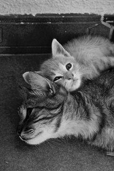 Best of friends :)