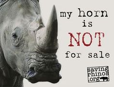 Save the rhino. I can't even imagine a world without rhino's. Their horns do not cure illnesses or cancer. You might as well eat your fingernails since it's basically the same stuff. African Animals, African Elephant, Rhino Logo, Ivory Trade, Save The Rhino, Abuse Quotes, Something To Remember, Stop Animal Cruelty, Rhinoceros