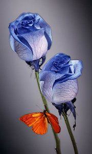 Rosa Azul With Orange Print by Kirk Ellison