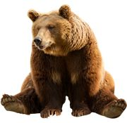 Bear PNG Images  On this site you can download free Bear PNG image with transparent background.