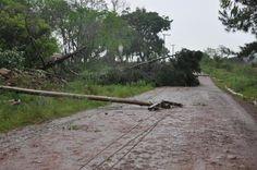 Temporais causam destelhamentos, quedas de árvores e falta de energia