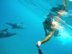 The dolphins (the Bottlenose Dolphin and the Spinner Dolphin), have made of the West coast of Mauritius a place for them to rest and sleep before going to the deep sea for their fishing. Snorkeling gear as per brochure. http://dolphinencounter-mauritius.com/en/dolphin-encounter/