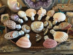The perfect accessories for any room in your seaside dream home. Seaside Home Decor, Shells, Artisan, Bulb, Night Lights, Cool Stuff, Room, Accessories, Products