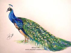 This is an original freehand colored pencil drawing of a lovely Peacock. Original drawing is 11x14 inches on smooth paper, and was created with colored pencils.
