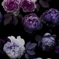 Midnight Lilac Rose Wall by Beccy Bland Seamless Repeat Royalty-Free Stock Pattern Dark Florals, Floral Flowers, Dark Backgrounds, Wallpaper Backgrounds, Wrath And The Dawn, Homestuck Characters, Stock Flower, Fox Spirit, Lilac Roses