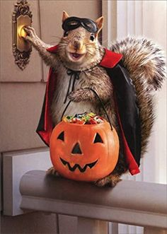 Funny Squirrel Pictures, Funny Halloween Pictures, Halloween Images, Cute Animal Pictures, Happy Halloween, Halloween Greetings, Halloween Halloween, Funny Pics, Funny Quotes
