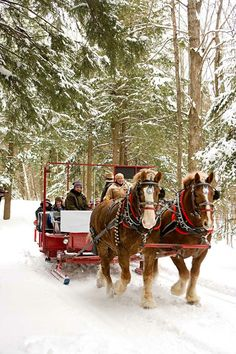Sleigh ride in snow.