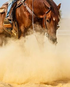 Beautiful reining Quarter Horse captured at full speed doing spins and sliding stops. Cowboy Horse, Horse Girl, Horse Love, Beautiful Horse Pictures, Beautiful Horses, Cowgirls, Paint Horse, Cutting Horses, Westerns