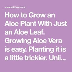 How to Grow an Aloe Plant With Just an Aloe Leaf. Growing Aloe Vera is easy. Planting it is a little trickier. Unlike other succulents and cacti, it is difficult to grow Aloe Vera from just a leaf. The chances of the leaf actually taking...