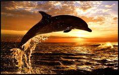 dauphin qui saute au coucher de soleil - Recherche Google